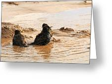 Time For A Mud Bath Greeting Card
