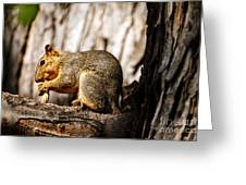 Time For A Peanut Greeting Card