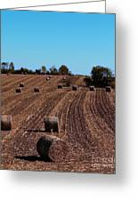 Time To Bale In Color Greeting Card