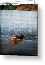 Time To Fetch Greeting Card by Joan  Minchak