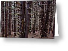 Timeless Forest Greeting Card
