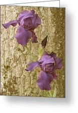 Timeless Iris  Greeting Card