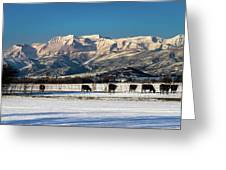 Timpanogos From The North Fields Greeting Card