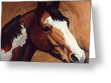 Tingeys Fancy   Paint Horse Greeting Card