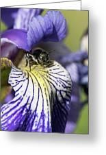 Tiny Bee Greeting Card