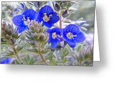 Tiny Blue Floral Greeting Card