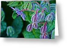 Tiny Blue Flower On A Bush At Pilgrim Place In Claremont-california  Greeting Card