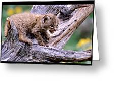 Tiny Bobcat Kitten Greeting Card