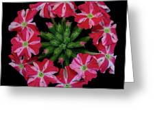 Tiny Bunch Of Red And Pink Flowers Greeting Card