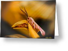 Tiny Butterfly Greeting Card