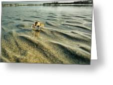 Tiny Crab In Water Greeting Card