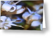 Tiny Flowers Greeting Card