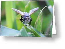 Tiny Fly Greeting Card