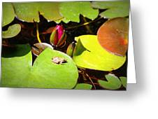 Tiny Frog Greeting Card