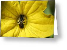 Tiny Insect Working In A Cucumber Flower Greeting Card