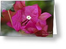 Tiny Little White Flower Greeting Card