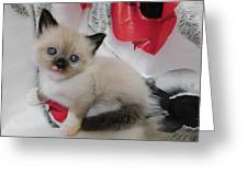 Tiny Micro Version Of Red White And Ragdoll Kitty Kitten Baby Cat Silktapestrykittenstm Greeting Card