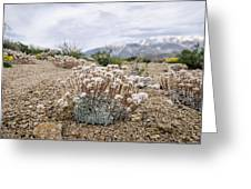Tiny Mountain Blooms Greeting Card by Margaret Pitcher