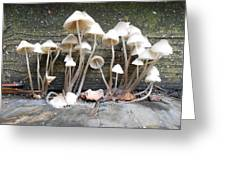 Tiny Mushrooms On The Step Greeting Card by Carrie Viscome Skinner