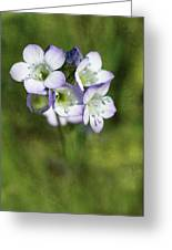 Tiny Purple And Blue Greeting Card