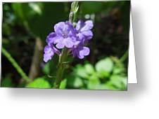 Tiny Purple Blooms Greeting Card