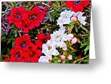 Burgundy Queen Bush At Pilgrim Place In Claremont-california Greeting Card