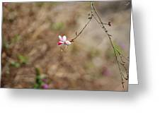 Tiny Red And White Wildflowers Greeting Card