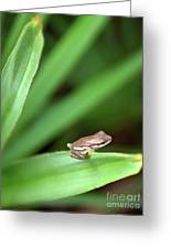 Tiny Tree Frog 01110 Greeting Card