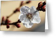 Tiny White Flower Greeting Card