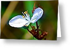 Tiny White Wildflower In Vicente Perez Rosales National Park Near Puerto Montt-chile  Greeting Card