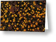Tiny Yellow Flowrers On The Desert Floor Greeting Card