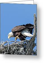 Tip Toeing Across Nest Greeting Card