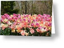 Tiptoe Among The Tulips Greeting Card