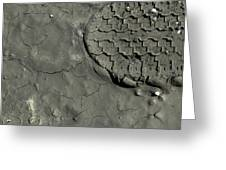 Tire Track In Gray Mud Greeting Card