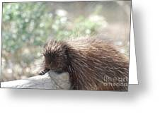 Tired Porcupine On A Fallen Log Greeting Card