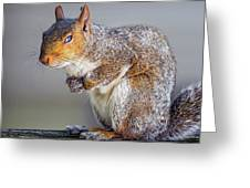 Tired Squirrel And Fly Greeting Card