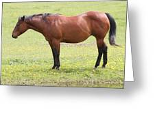 Tired Horse Greeting Card