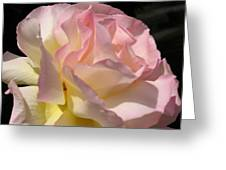 Tissue Paper Rose Greeting Card