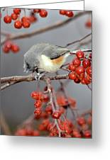 Titmouse Breakfast Greeting Card
