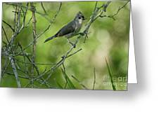 Titmouse In The Brush Greeting Card