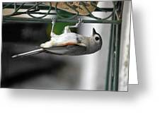 Titmouse Trickery Greeting Card