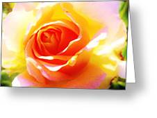 Tjs Rose A Glow Greeting Card