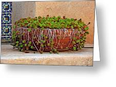 Tlaquepaque Potted Greens Greeting Card