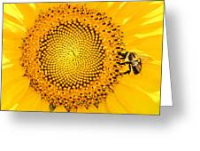 To Bee Or Not To Bee Greeting Card