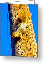 To Squirrels And To Me Greeting Card by Guy Ricketts
