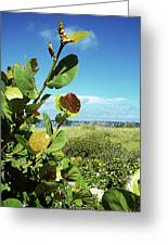 To The Sky Gp Greeting Card