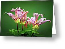 Toad Lilies Greeting Card