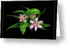 Toad Lily Greeting Card