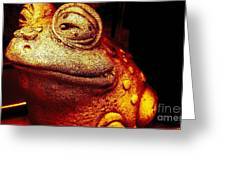 Toad Greeting Card