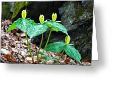 Toad Shade Trillium Greeting Card